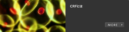 CRFとは